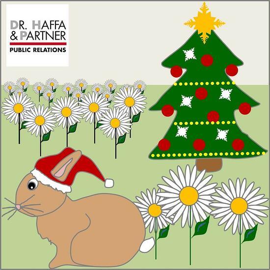 Weihnachten_Gänseblümchen im Dezember_haffapartner